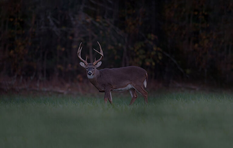 View of buck in low-light conditions
