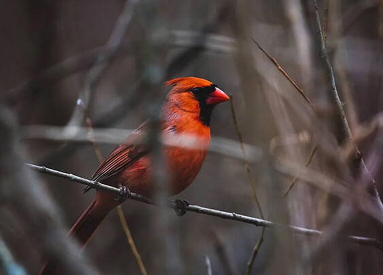 Bird Watching Buyer's Guide