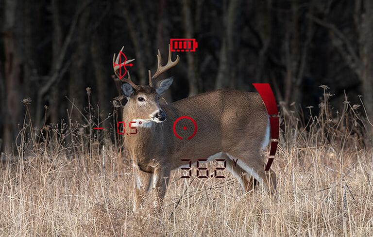 View of buck with rangefinder information overlay