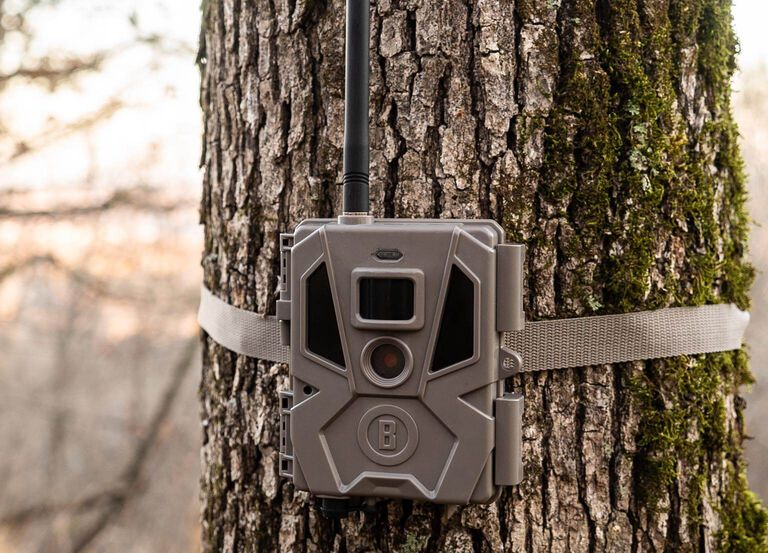 Picture of Cellucore Trail Camera on a Tree